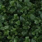 Ivy-E---50X100---20''X40''